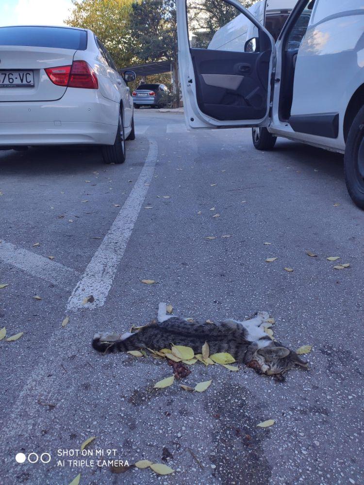 Mačke stradale u prometu | foto: Joško Jaković