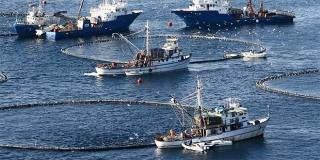 Sardina: Na stolove donosimo vrhunske riblje proizvode rađene po izvornim recepturama
