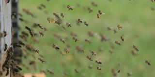 Gala med: Sve od pčela i za pčele