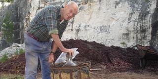 DALMATINSKO EVANĐELJE: Sorte loze u Dalmaciji, prošek i kvasina