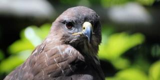 Godišnje se samo u Hrvatskoj ilegalno ubije pola milijuna ptica