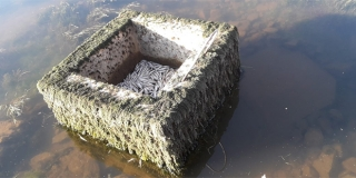 ŠTO SE DOGAĐA Pomor ribe na izvoru Čikole!