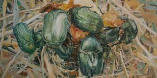 'Garden' Nevene Petre Piližota u Prirodoslovnom muzeju grada Splita