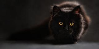 Poziv splitskim vatrogascima: 'Mačka mi se zavukla među police'
