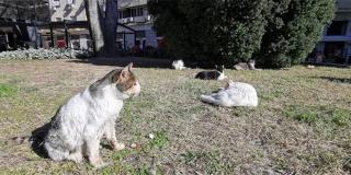 Ponovno nestale kućice za splitske mace, HNK u ponedjeljak radi nove ako ih ne vrate