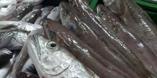 Splitski peškaduri organizirali dostavu ribe, prva tura bit će dostupna sutra