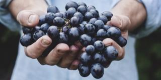 VRGORAC: Znanost i struka u službi poljoprivrede