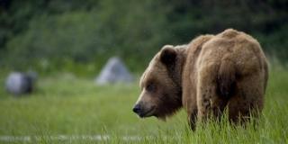 Macola legalizirao svoj medvjeđi zoološki vrt