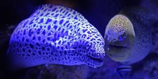 Sve ribe Jadrana na jednom mjestu-njih 456