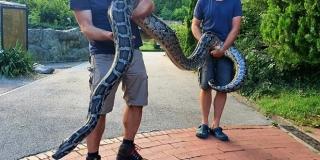 Piton od 5,5 metara i 50 kilograma 'čuvao' mu travu