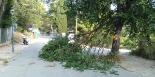 NEVRIJEME Bura čupa stabla po Splitu