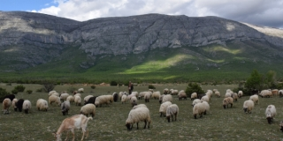 DINARA BACK TO LIFE Projekt za očuvanje planine dobio vizualni identitet