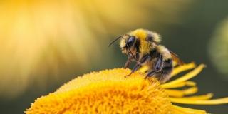 ZABRINJAVAJUĆI REZULTATI STUDIJE Zračenje mobilnih telefona moglo bi štetiti insektima