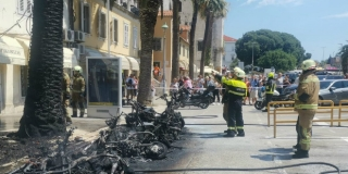 Palme na Rivi jače od požara: 'To nijedno stablo ne bi preživjelo'