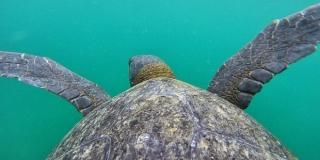 Prilov ugrožava opstanak morskih kornjača i drugih ugroženih vrsta