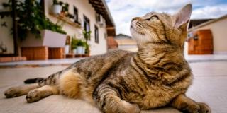 MONSTRUOZNO: U Hvaru otrovom i palicom ubijeno čak 17 mačaka