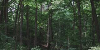 STRAVIČNO: 21-godišnji motociklist poginuo zbog sajle postavljene nasred šumskog puta?!
