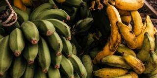 Znate li zašto banane na tržnici često vise u zraku na konopcu?