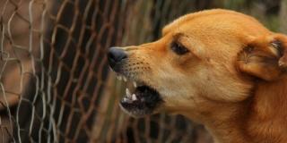 STRAVIČNO Dvogodišnjem dječaku psi pregrizli genitalije i arteriju dok su se roditelji zabavljali