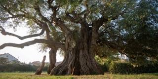 Bira se kandidat za Europsko stablo 2021. godine
