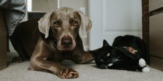 Kod četiri psa i jedne mačke potvrđena je infekcija COVIDOM 19