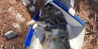 U Splitu se nastavlja trovanje mačaka? Jutros su zvali policiju zbog novog slučaja