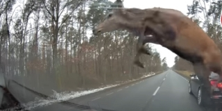 NEVJEROJATNA SNIMKA Vozač BMW-a naletio na krdo jelena