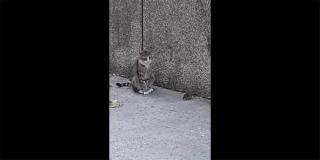TOM I JERRY Pogledajte video snimljen u Splitu, podsjetit će vas na popularni crtić