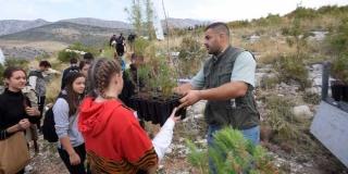 KRAJ OVOGODIŠNJE BORANKE: 'U tri godine posađeno je preko 100.000 stabala'