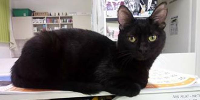 www velika crna maca maca