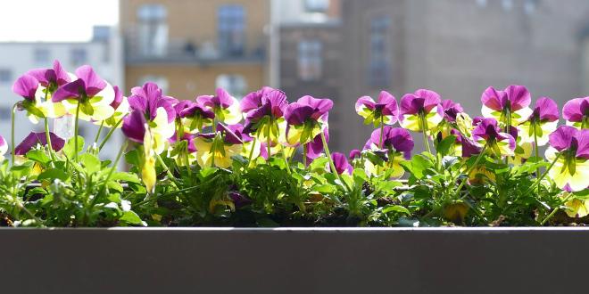 Kako uvelu biljku vratiti u život?