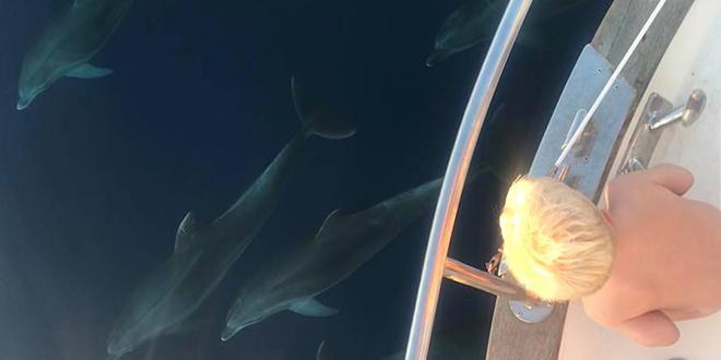 VIDEO IZ BRAČKOG KANALA Doživljaj za pamćenje: 'Izbrojili smo 14 dupina ispod broda, a još 15 do 20 ih je bilo malo dalje'