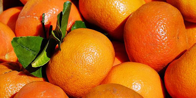 Posebne epidemiološke mjere za sezonu berbe mandarina