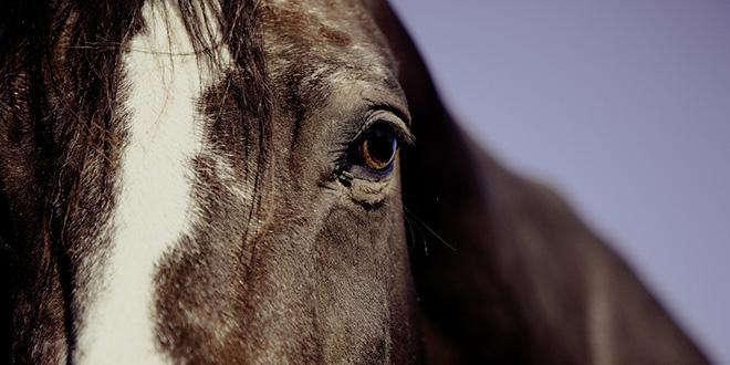DEFINITIVNO: Konji se na Marjanu neće koristiti, radit će se u sustavu žičara
