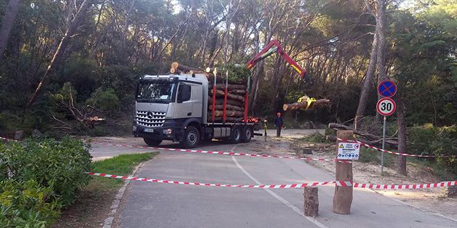 Firma koja sječe stabla na Marjanu će i otkupiti drvnu masu