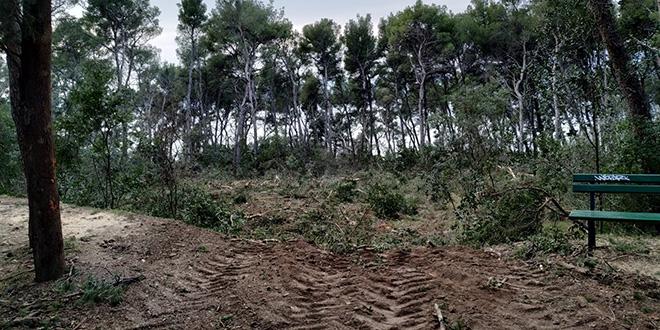 POTVRĐENO DALMATINSKOM PORTALU: Da, istina je, na Marjanu se obaraju i zdrava stabla i radi se bez ikakvog elaborata!