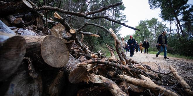 NOVI PROBLEMI Šumarski fakultet odbio vještačiti posječena stabla na Marjanu