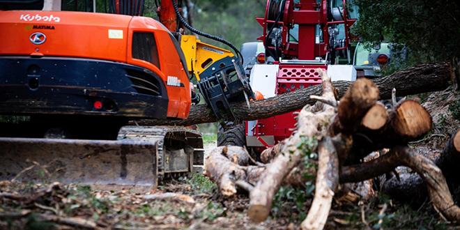 Za pilanje i izvlačenje stabala platit ćemo nekoliko milijuna više nego što je u početku planirano