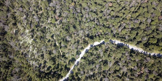 Dramatično stanje na Marjanu: Nema feromona, u borovima žarišta potkornjaka, oštećeni suhozidi, posječeni čempresi i masline