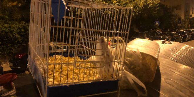 UŽAS Netko je kućnog ljubimca ostavio na kontejneru usred Splita
