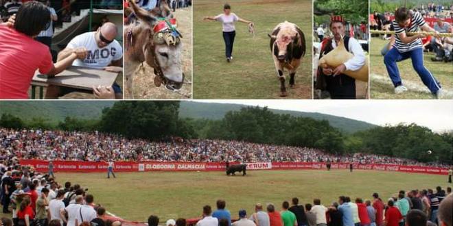 NAJPOPULARNIJA BIKIJADA Ove nedjelje Seoska olimpijada i borbe bikova u Radošiću