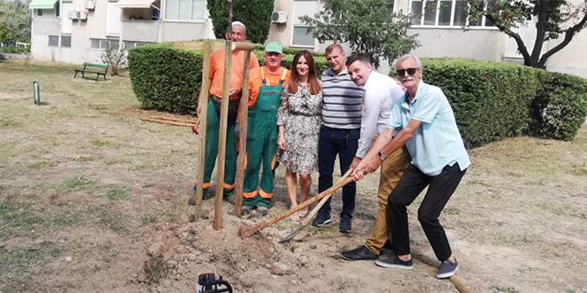 Kotar Bol pokrenuo ekološku akciju 'Trebam stablo, sadim stablo'