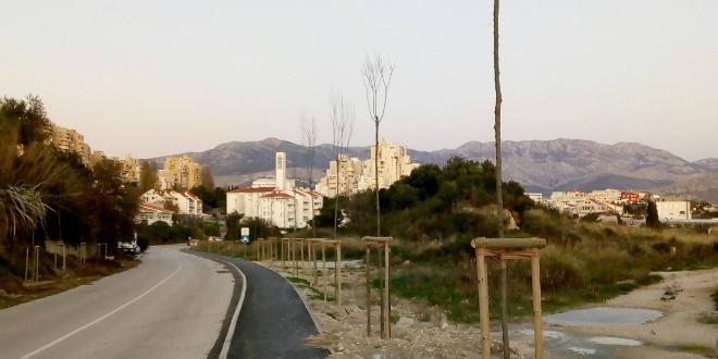 GRAD SPLIT O DRVOREDU U BRAČKOJ: 'Ako projekt bude zahtijevao, uklonit će se nekoliko stabala'