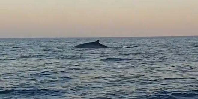 VIDEO 'Između Paklenjaka i Visa smo naletjeli na - kita'