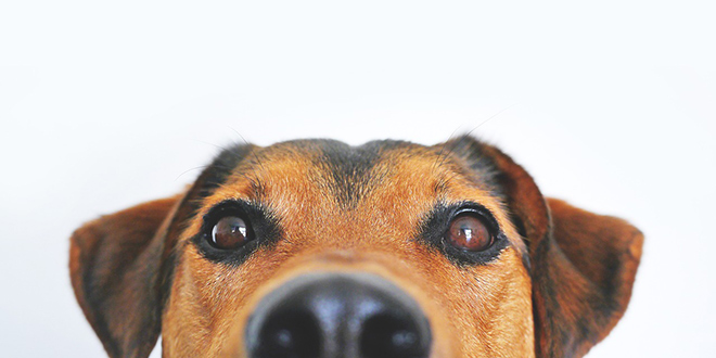 SPLIĆANKA POTJERANA KUĆI 'Policajka mi je rekla da i ona ima psa, ali da ga ne vodi vanka?!'