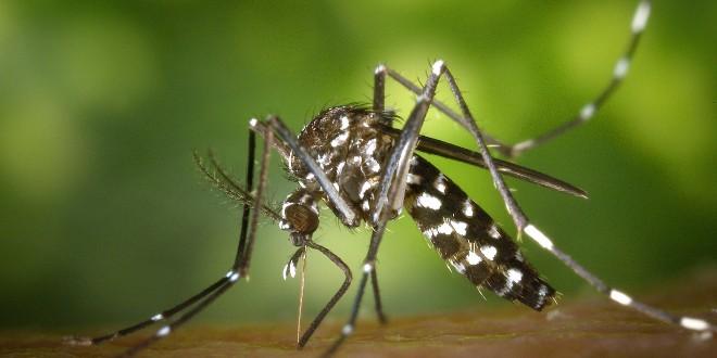 Invazija komaraca: 150 uboda u 15 minuta