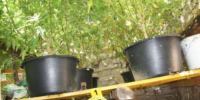 Policija u Engleskoj našla plantažu marihuane na tri kata, vrijedi oko milijun funti