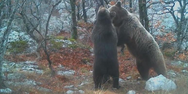 U Nacionalnom parku Paklenica nađeni mrtvi medvjedići, slučaj istražuje policija