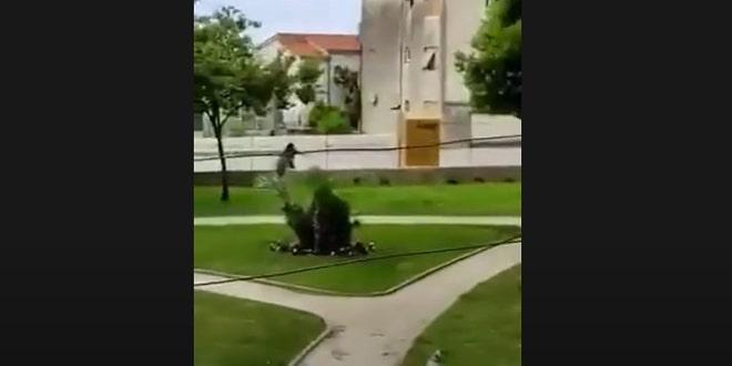 VIDEO Vrane napadaju ljude i u Kaštelima