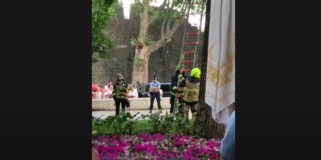 VIDEO: INTERVENCIJA U ĐARDINU Napukla grana, stigli vatrogasci i policija